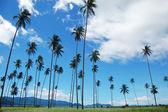 Palms mountain view — Stock Photo