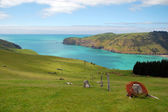 Ocean bay view — Stock Photo