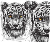 Sketch of white tiger — Stock Vector