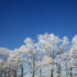 Winter frozen trees — Stock Photo #12466396
