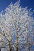 Frozen tree — Foto de Stock