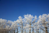 Winter frozen trees — Stock Photo