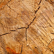 Tree stump texture background — Stock Photo