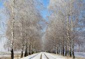 Paisaje de invierno ruso — Foto de Stock