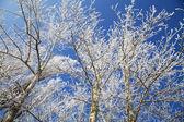 Inverno congelado árvores — Foto Stock