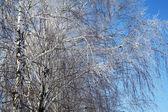 Güzel kış ağaçlar — Stok fotoğraf