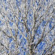 Frozen winter trees with frost — Stock Photo #13423109