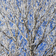 Frozen winter trees with frost — Stock Photo