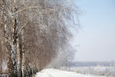 Winter road and birch tree — Stock Photo