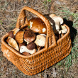 Stock Photo: Basket with different autumn mushrooms