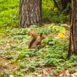 Little squirrel in autumnal forest — Stock Photo