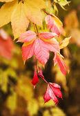 红色和黄色的秋叶 — 图库照片