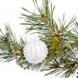 Royalty-Free Stock Photo: Fir tree branch with white Christmas ball