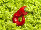Fresh green iceberg salad and small red chili pepper — Stock Photo