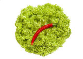 Fresh green iceberg salad and red chili pepper on it — Stock Photo