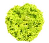 Fresh green iceberg salad — Stock Photo