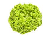 Green fresh iceberg salad on white background — Stock Photo
