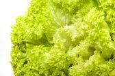 Green iceberg salad on white background — Stock Photo