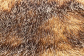 Golden and brown fur texture — Stock Photo