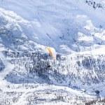 Alps snow hills with orange parachute — Stock Photo