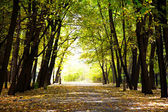 Autumnal pathway in forest — Stock Photo