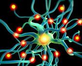 Sinir sistemi — Stok fotoğraf