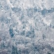 Coniferous forest covered by snow. — Stock Photo #17211727