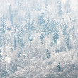 Coniferous forest covered by snow. — Stock Photo #17211737
