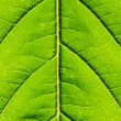 Green Leaf extreme Close-up — Stock Photo #17212309