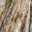 Brown bark of tree — Stock Photo #17212929