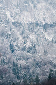 Coniferous forest covered by snow. — Stock Photo