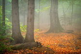 Autumn landscape in the forest — Stock Photo