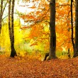Stock Photo: Forest landscape in autumn