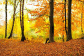 Forest landscape in autumn — Stock Photo