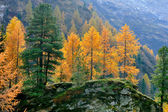 Mountain landscape in fall — Stockfoto