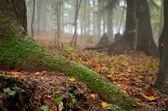 Podzimní krajina v lese — Stock fotografie