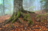 Herfst landschap in het forest — Stockfoto