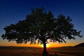 Samotne drzewo na polu świcie — Zdjęcie stockowe