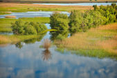 Danube delta landscape — Stock Photo