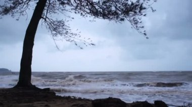A tree at the beach during monsoon season.