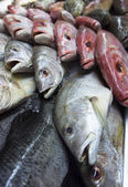 Assortment of fishes — Stock Photo