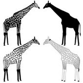 Giraffe silhouettes collection — Stock Vector