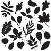 Collection of leaves silhouettes — Stock Vector