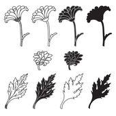 Chrysanthemum flowers and leaves — Stock Vector