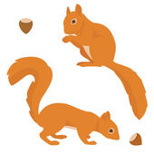 Two vector squirrels — Vettoriale Stock