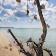 Dead tree with shells - Stock Photo