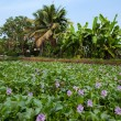 Backwaters Kerala — Stock Photo