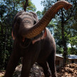 Domestic Elephant in kerala state in india — Stock Photo