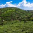 Nelliyampaty Hills Tea Fields in mumnar Kerala state india - Stock Photo