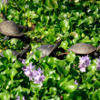 The Painted Turtle - Stock Photo
